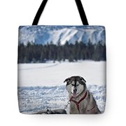 Dog Team Tote Bag by Duncan Selby