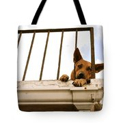 Doggie Down Time Tote Bag