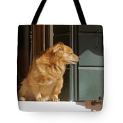 Doggie In The Window Tote Bag
