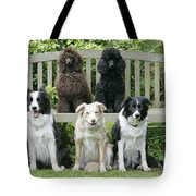 Dogs Sitting On Bench Tote Bag