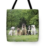 Dogs, Various Breeds In A Line Tote Bag