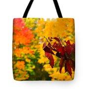 Dogwood And Fall Colors Tote Bag