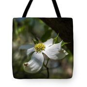 Dogwood Bloom In Shadows Tote Bag