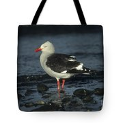 Dolphin Gull Tote Bag
