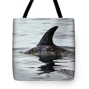 Dolphin In Monterey Tote Bag