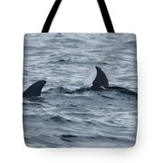 dolphins in Panama Tote Bag