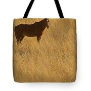 Domestic Horse   #5347 Tote Bag