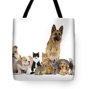 Domestic Mammal Pets Tote Bag