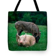 Domestic Pig And Donkey Tote Bag by Tierbild Okapia
