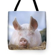 Domestic Pig Tote Bag