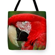 Dont You Dare To Stare Macaw Tote Bag