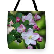 Door County Apple Blossoms Tote Bag