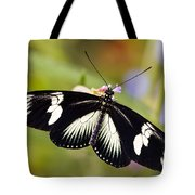 Doris Longwing Butterfly Tote Bag