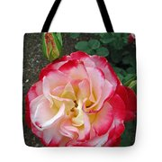 Double Delight Hybrid Tea Rose Tote Bag
