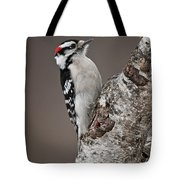 Downy Woodpecker Pictures 11 Tote Bag