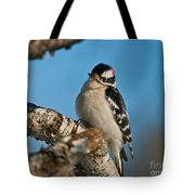 Downy Woodpecker Pictures 23 Tote Bag