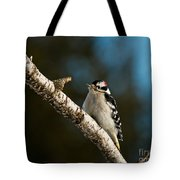 Downy Woodpecker Pictures 25 Tote Bag