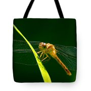 Dragon Fly On Grass Tote Bag