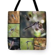 Dragonflies On Twigs Collage Tote Bag