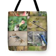 Dragonfly Collage 3 Tote Bag