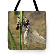 Dragonfly Newly Emerged - Second In Series Tote Bag