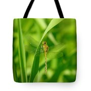 Dragonfly On A Grass Stem Tote Bag