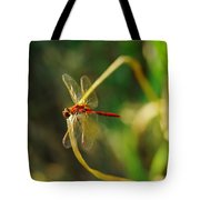 Dragonfly On A Summer Day Tote Bag