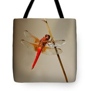 Dragonfly On Dead Reed Tote Bag