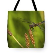 Dragonfly On Seed Pod 2 Tote Bag