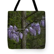 Draping Wisteria Frutescens Wildflower Vines Tote Bag