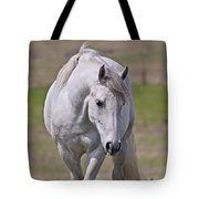 Lipizzane Dreaming Tote Bag