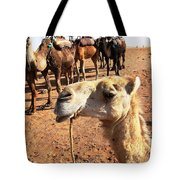Dreaming Of Hump Day Tote Bag