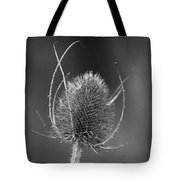 Dried Common Teasel Tote Bag