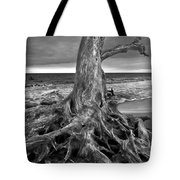 Driftwood On Jekyll Island Black And White Tote Bag
