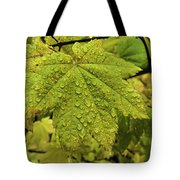 Dripping Vine Maple Tote Bag