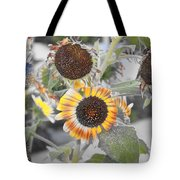 Dry Sunflowers Tote Bag