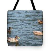Ducks On Spaulding Pond Tote Bag