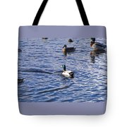 Ducks Swimming  Tote Bag