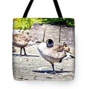 Ducky Dance Tote Bag