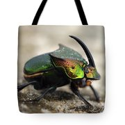 Dung Beetle Tote Bag by Roger Snyder