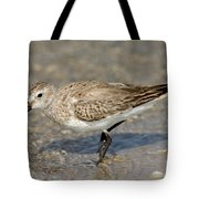 Dunlin Calidris Alpina In Winter Plumage Tote Bag