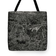 Dusk Fawn Tote Bag