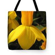Dwarf Cyclamineus Daffodil Named Jet Fire Tote Bag