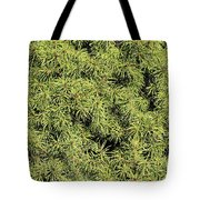 Dwarf Evergreen Tote Bag