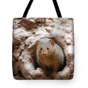 Dwarf Mongoose  Tote Bag