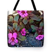 Dwarf Purple Monkeyflower In Lava Beds Nmon-ca Tote Bag
