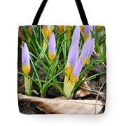 Eager To Sunshine Tote Bag