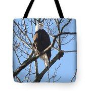 Bald Eagle Sunny Perch Tote Bag