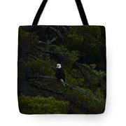 Eagle In White Pine Tote Bag