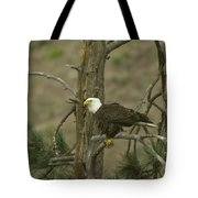 Eagle On A Tree Branch Tote Bag